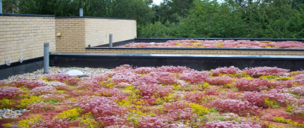 creating green roof
