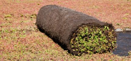 Voorbegroeide sedummatten voor groendaken en als bodembedekker